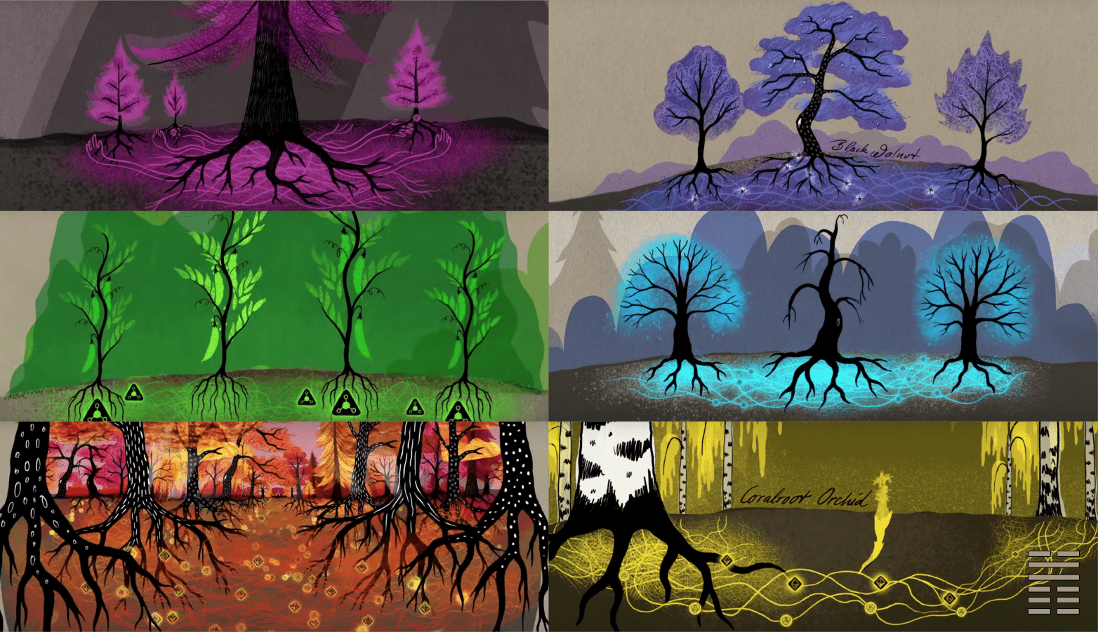 """Images from BBC News, """"How trees secretly talk to each other"""" video"""