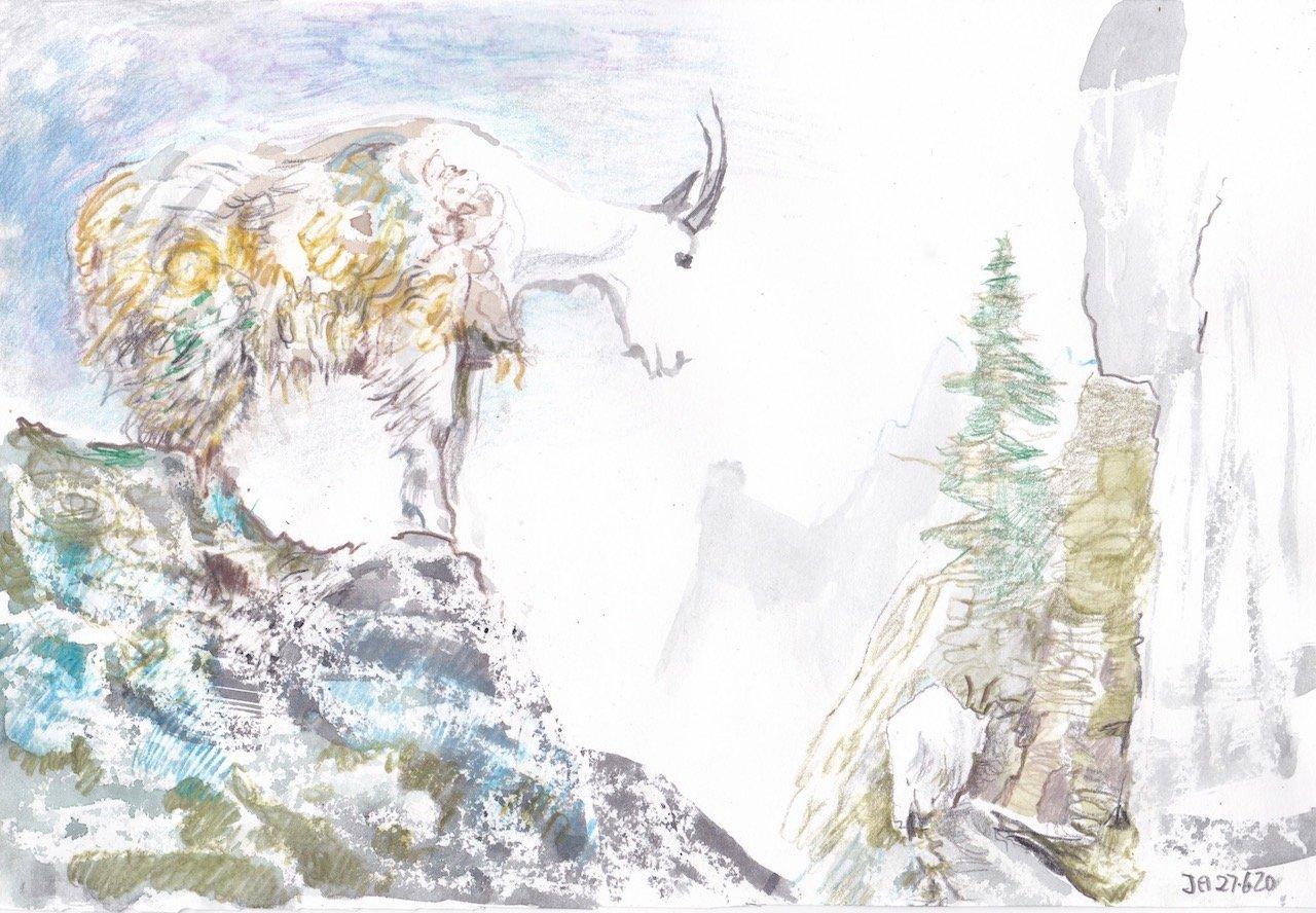 mountain-goat-2
