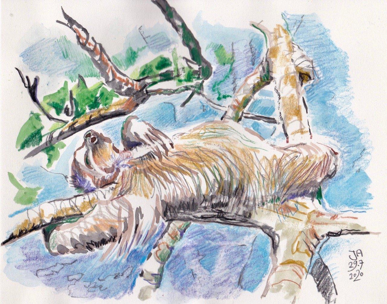 sloth-rest