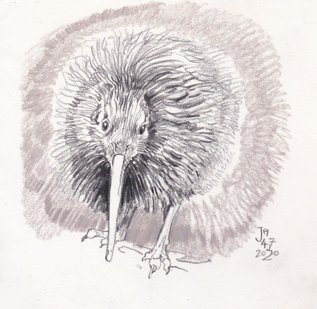 kiwi-sketch