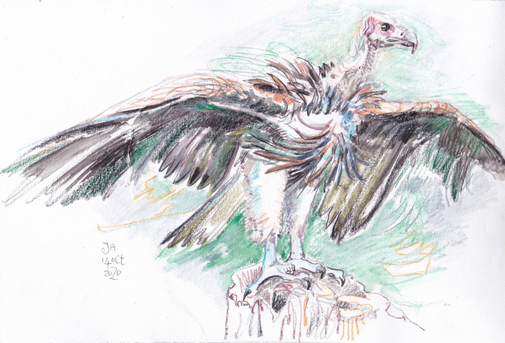 vulture-sketch